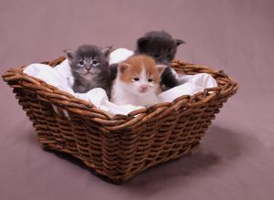 Pets_Image